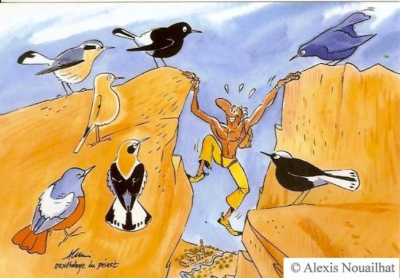 ornithologue du désert