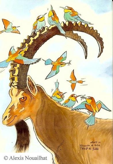 le bouquetin de Nubie