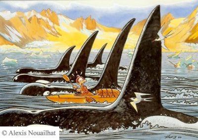 les orques et le nautiraid