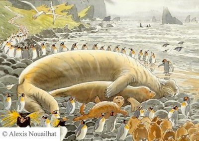 les éléphants de mer