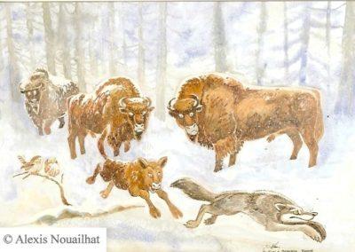 les bisons de Bialowieza