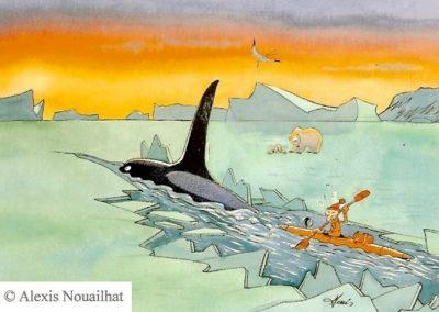 l'orque et le kayakiste