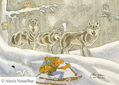 les 3 loups gris