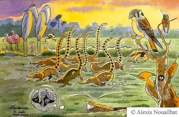 les coatis Pantanal