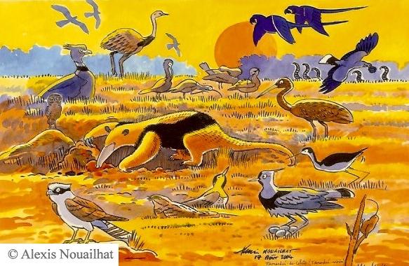 le tamandua Pantanal