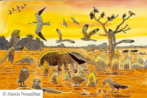 le tamanoir Pantanal