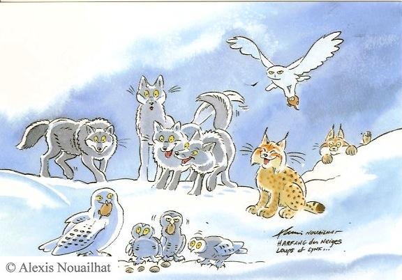 l'harfang des neiges, loups et lynx