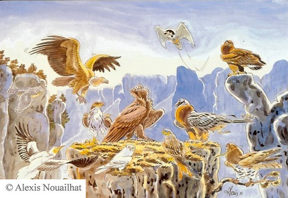 réintroduction du vautour moine
