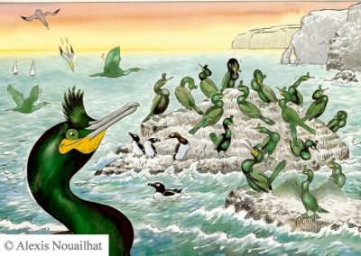 les cormorans huppés