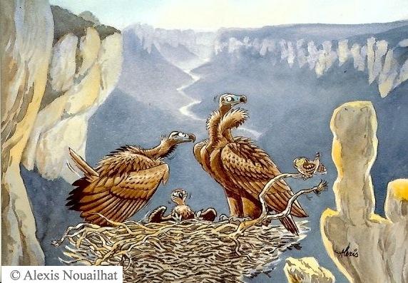 couple de vautours moines