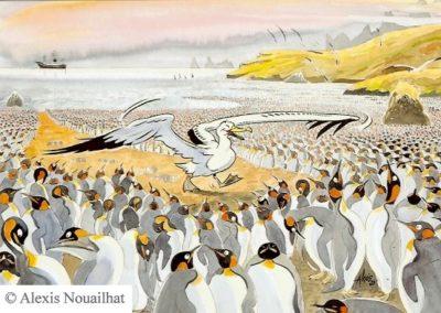 l'albatros et les manchots
