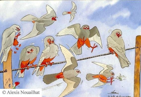 la halte des faucons kobez