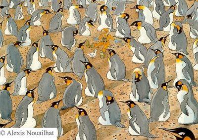 la colonie de manchots royaux