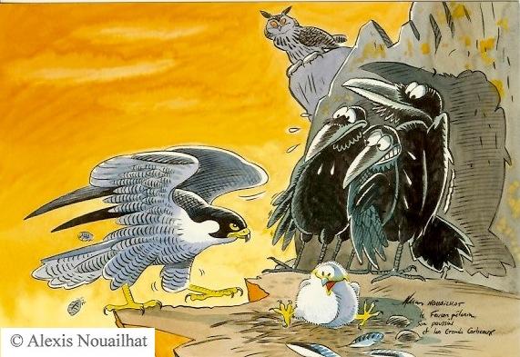 le faucon pélerin et les grands corbeaux