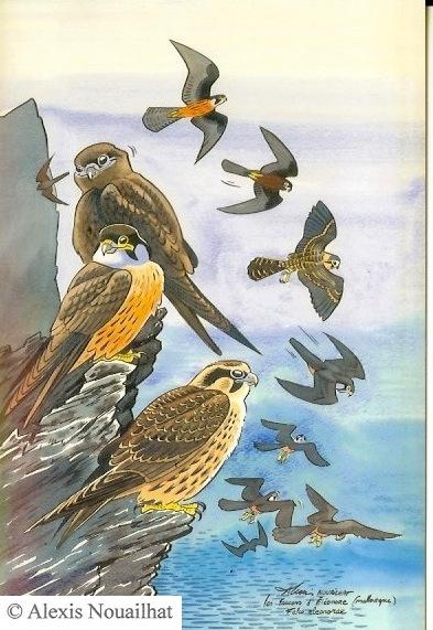 les faucons d'éléonore