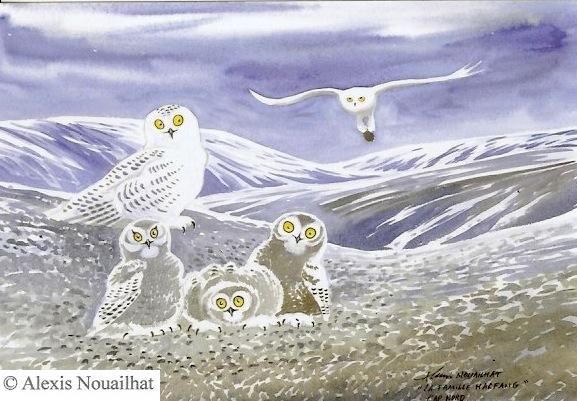 famille de chouettes harfang des neiges