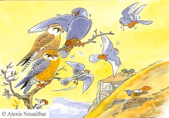 les faucons kobez en escale migratoire