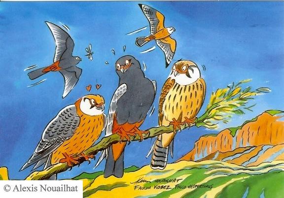les faucons kobez