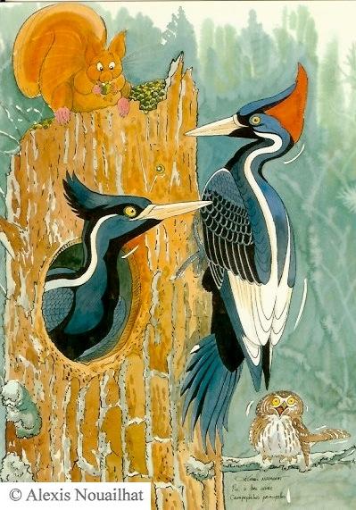 le couple de pic à bec d'ivoire
