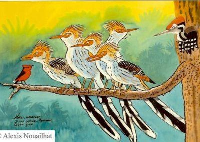 le guira cantara Pantanal