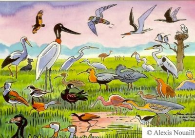 les oiseaux du Pantanal
