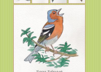 enregistrement oiseaux